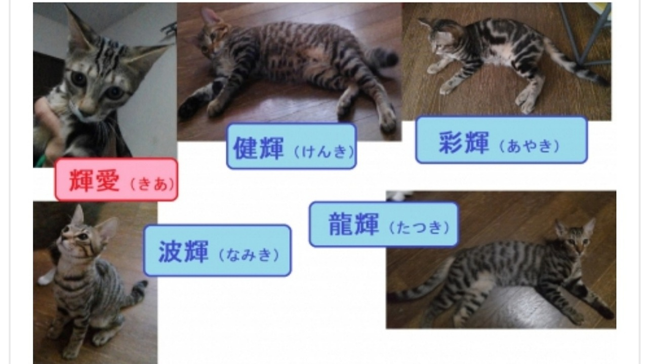 CCP20211参加猫